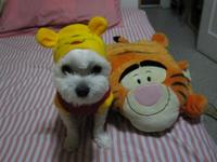 th_Rocky_the_Pooh__091015112610.JPG
